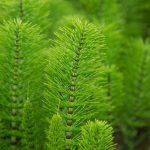 green-plant-1465402635JdV